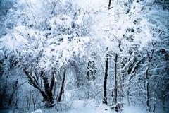 zima drewno Fotografia Stock