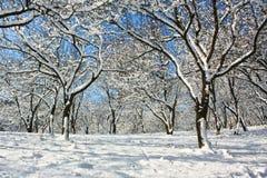 zima drewno Zdjęcie Royalty Free