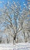 zima drewno Obrazy Stock
