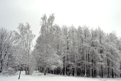 zima drewno Zdjęcia Royalty Free