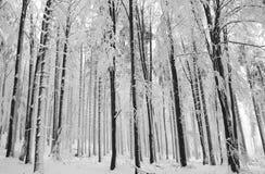 zima drewno Obrazy Royalty Free