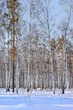 zima drewno Obraz Stock