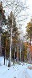 zima drewno Zdjęcia Stock