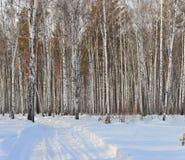 zima drewno Obraz Royalty Free