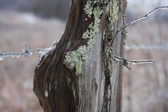 Zima drut kolczasty Fotografia Stock