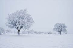 zima drzew Obraz Stock