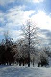 zima drzew Zdjęcie Royalty Free