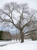 zima drzew Zdjęcie Stock