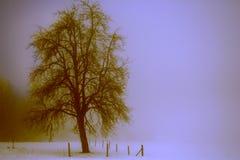 zima drzew Zdjęcia Royalty Free