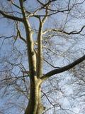 zima drzew Fotografia Royalty Free