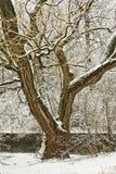zima drzew Obrazy Royalty Free