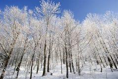 Zima drzewa Zdjęcia Stock