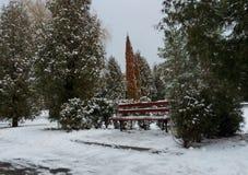 Zima drzewa krajobraz i Obraz Stock