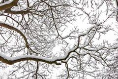 Zima. Drzewa zakrywający z śniegiem. Obraz Stock