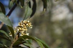 Zima drzewny kwiat Obrazy Royalty Free