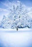 Zima drzewo Obrazy Royalty Free