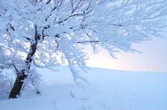 Zima drzewo Obrazy Stock
