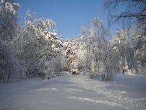 Zima dzień, śnieżny las, mroźni wzory na drzewach, błękita jasny niebo, puszysty biały śnieg nadchodzący boże narodzenia, gałąź z zdjęcie stock