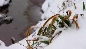 Zima dzień, śnieg spada na małym strumieniu trawa ono waha się zbiory
