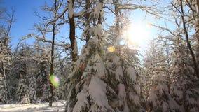 Zima dzień zbiory wideo