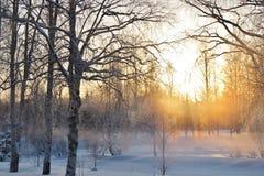 Zima dzień przy Norrforsen w RÃ¥neÃ¥ zdjęcia stock