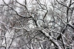 Zima dzień Fotografia Royalty Free