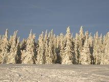 Zima dzień w lesie zdjęcia royalty free