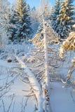 Zima dziki las nad marznięcie rzeki dużo śniegiem Zdjęcie Royalty Free