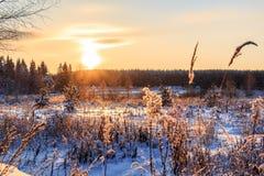 Zima field Zdjęcia Royalty Free