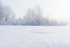 Zima Gałąź drzewa i krzaki w śniegu Fotografia Stock