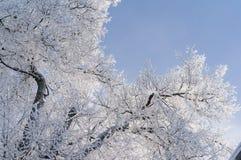Zima Gałąź drzewa i krzaki w śniegu Obrazy Royalty Free
