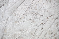 Zima, gałąź w hoarfrost Zdjęcie Stock
