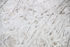 Zima, gałąź w hoarfrost Obraz Royalty Free