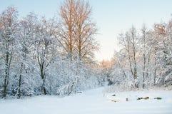 Zima, Hoarfrost i Oszrania na drzewach Zdjęcie Stock
