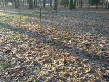 Zima i jesień w parku spotykającym obraz royalty free