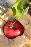 Zima jabłko Obrazy Stock