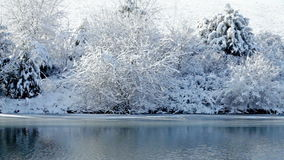 Zima jezioro zbiory wideo