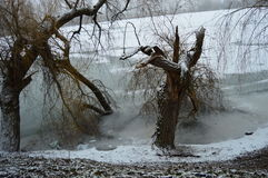 Zima jezioro Fotografia Stock