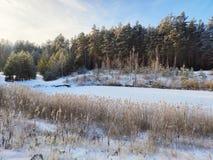 Zima jezioro w lesie obraz stock