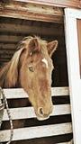 Zima koń Zdjęcia Royalty Free
