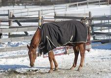Zima koń Fotografia Royalty Free