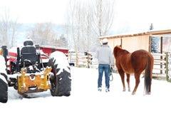 Zima koń Fotografia Stock