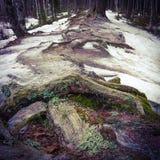 Zima korzenie Zdjęcia Royalty Free