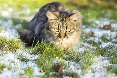 Zima kot Zdjęcia Stock