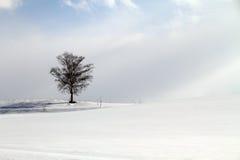 Zima kraina cudów Zdjęcia Stock