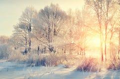 Zima krajobraz - śnieżni zim drzewa w zima lesie przy zmierzchem z światłem słonecznym promienieją obrazy stock