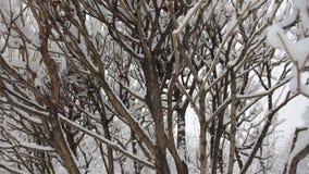 Zima krajobraz - śnieżyste gałąź drzewa przeciw chmurnego nieba tłu zdjęcie wideo