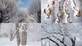 Zima krajobraz - śnieżysty las w pogodnej pogodzie zbiory wideo