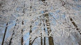 Zima krajobraz - śnieżysty park z pięknymi drzewami, zakrywającymi z hoarfrost zbiory