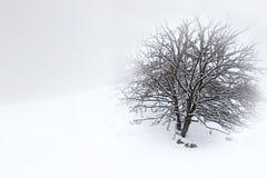 Zima krajobraz obrazy stock